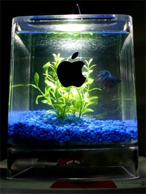 Un aquarium original