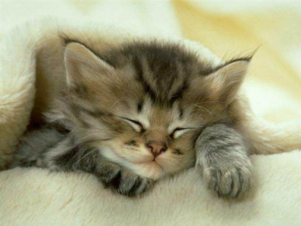 Cat@Log, un collier pour chat relié à Twitter