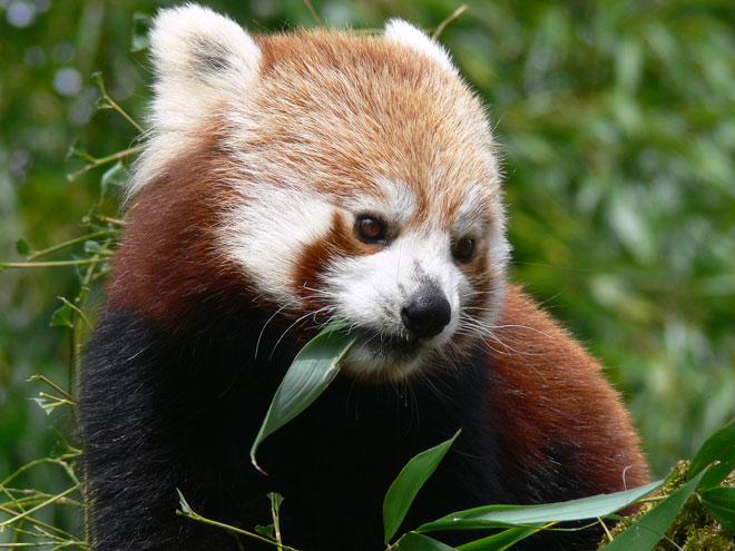 Firefox 4.0 est disponible !