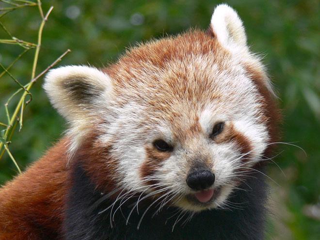 Firefox 5 : quelques nouveautés en vrac