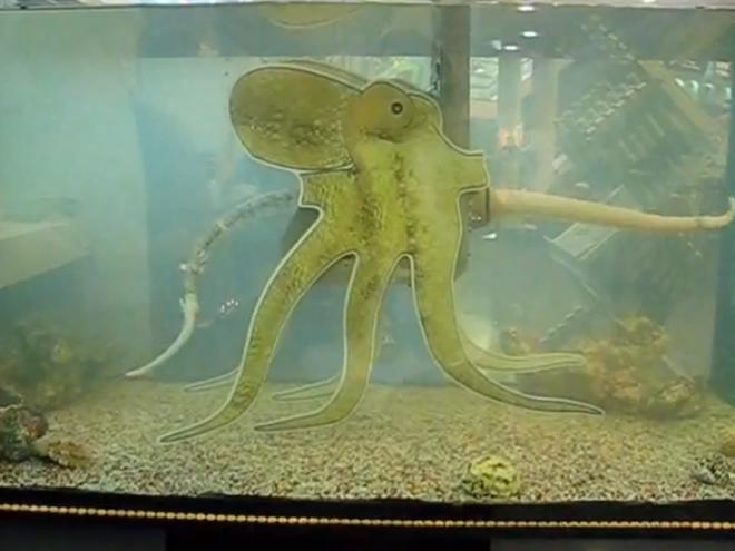 Vidéo un robot pieuvre qui finira sans doute par gouverner le monde