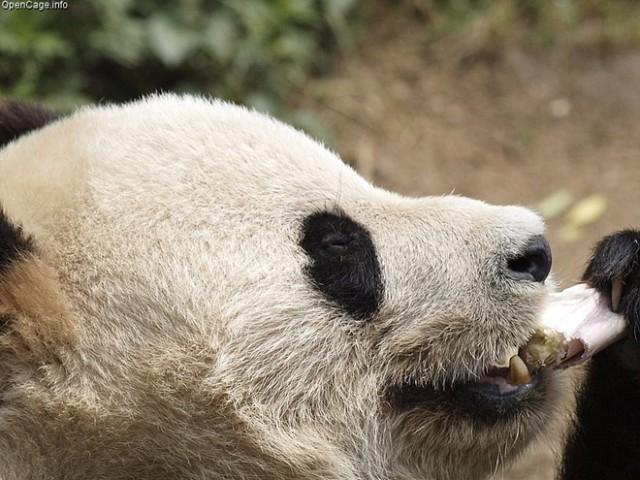 Google Panda est lancé en France et en Europe !