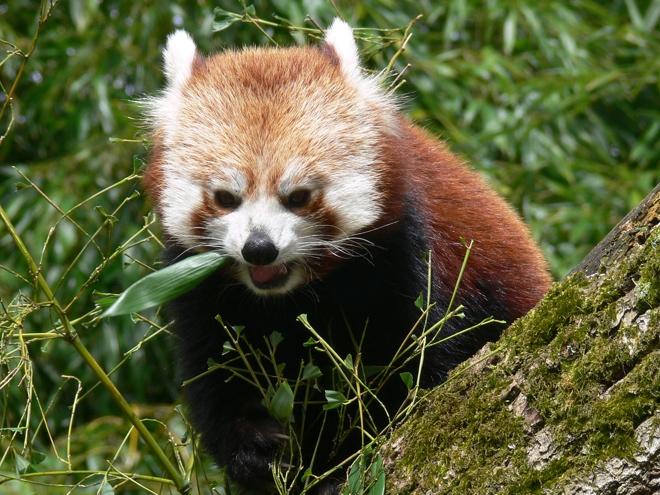 Firefox : une collection d'extensions pour se protéger sur le web