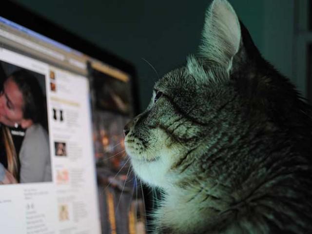 Facebook : intégration des permaliens et du span pour les commentaires