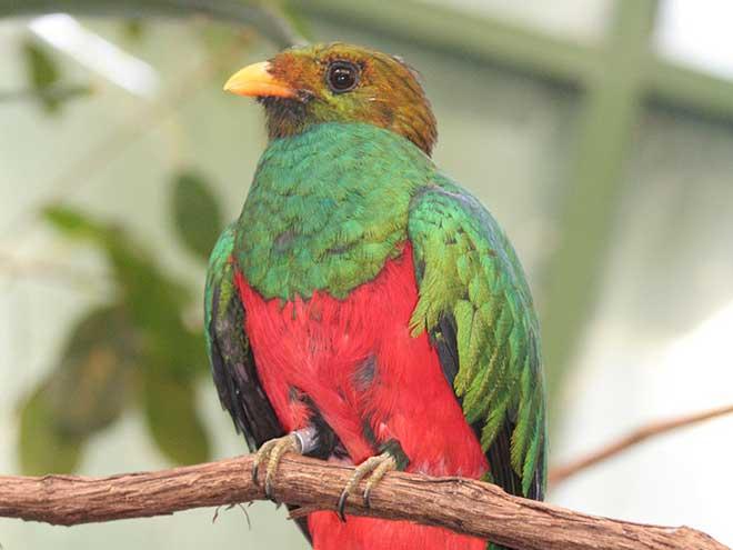 Ubuntu 12.10 : Quantal Quetzal