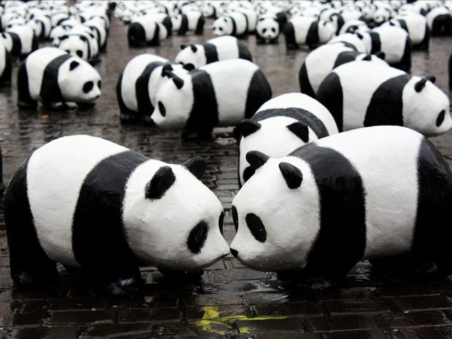Google Panda : la mise à jour qui se cachait derrière la mise à jour