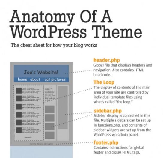 infographie-wordpresst-544x527