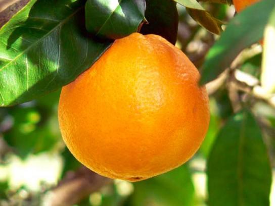 orange-presse-francaise-544x408