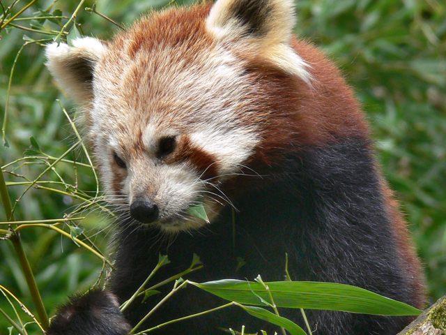Firefox va faire dans le social !