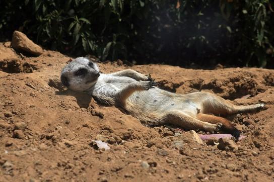 ubuntu-maverick-meerkat-544x362
