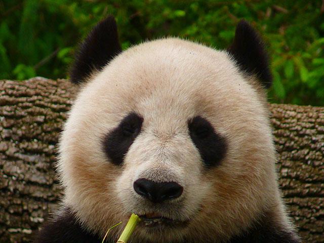 Google Panda, le déploiement manuel est terminé