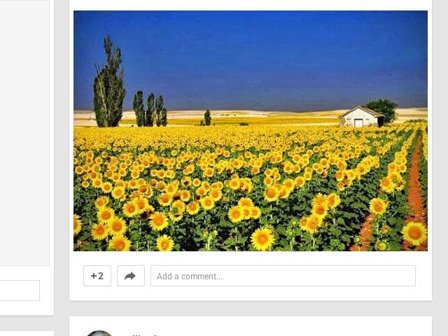 Reconnaissance images Google+