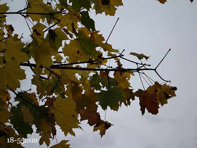 Test Canon EOS 100D : photo 10