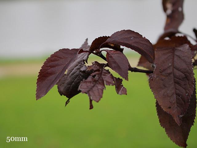 Test Canon EOS 100D : photo 5