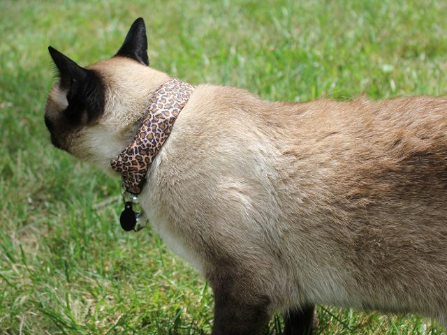 Coco, le chat hacker