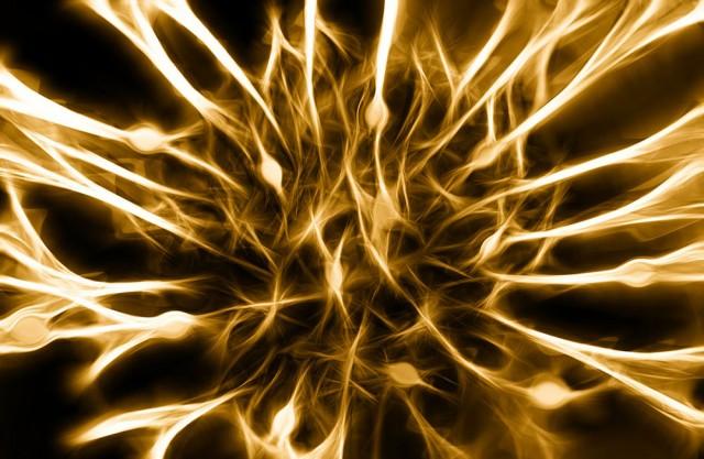 Greffe neurones souris