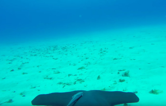Vidéo requin