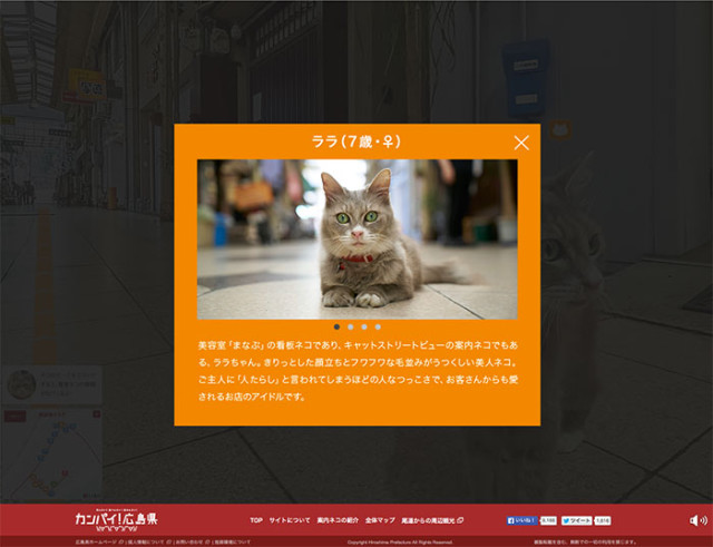 Cat Street View : image 2