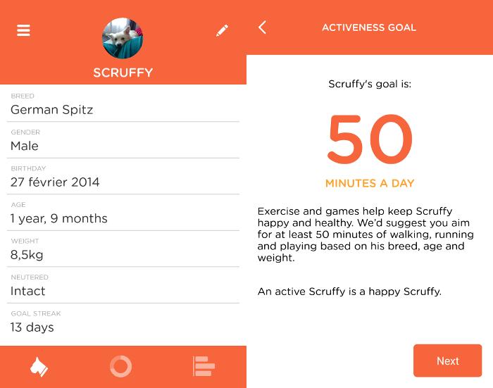 L'objectif quotidien de Scruffy selon le PitPat