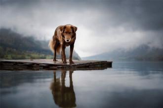 Photo chien 1