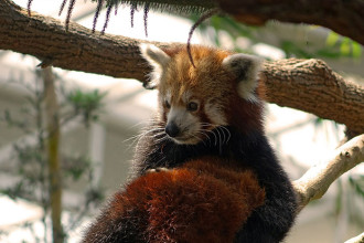 Firefox 44