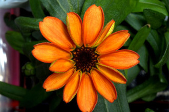 Fleur de l'espace
