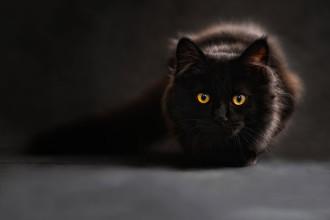 Que pense le chat ?
