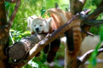 Fin Firefox OS