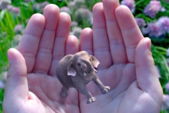 Levée de fonds Magic Leap