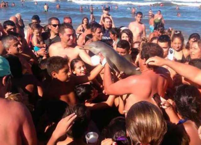 Mort bébé dauphin