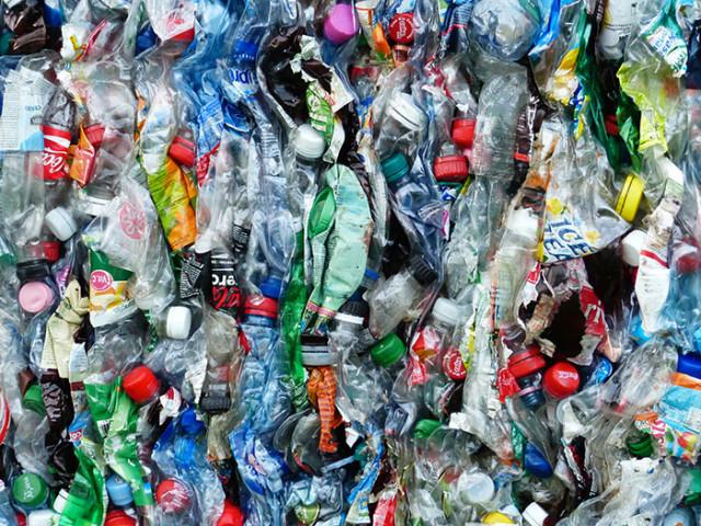 Bactérie Plastique