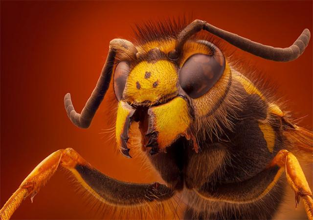 Photo Insecte 2
