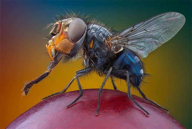 Photo Insecte 4