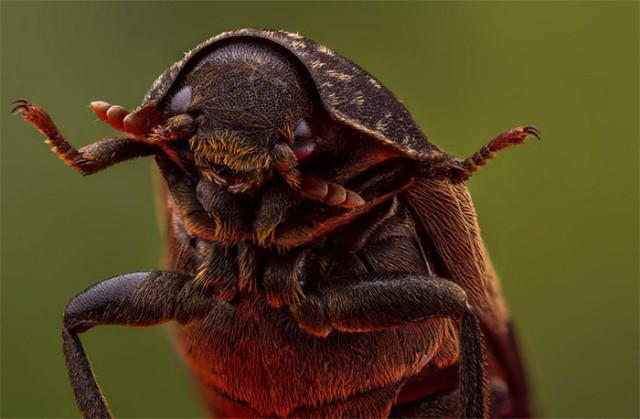 Photo Insecte 6