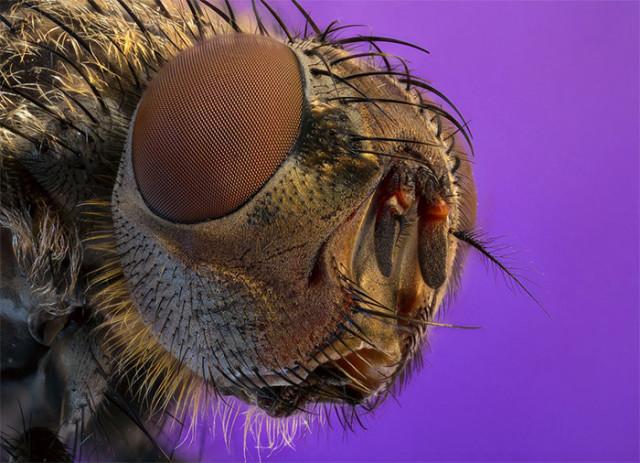Photo Insecte 7