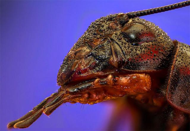 Photo Insecte 8