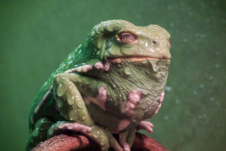 Jabba Grenouille : image 1