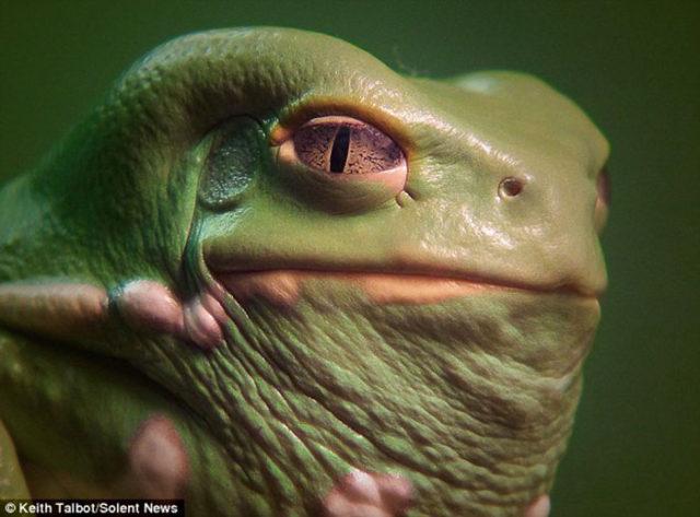 Jabba Grenouille : image 2
