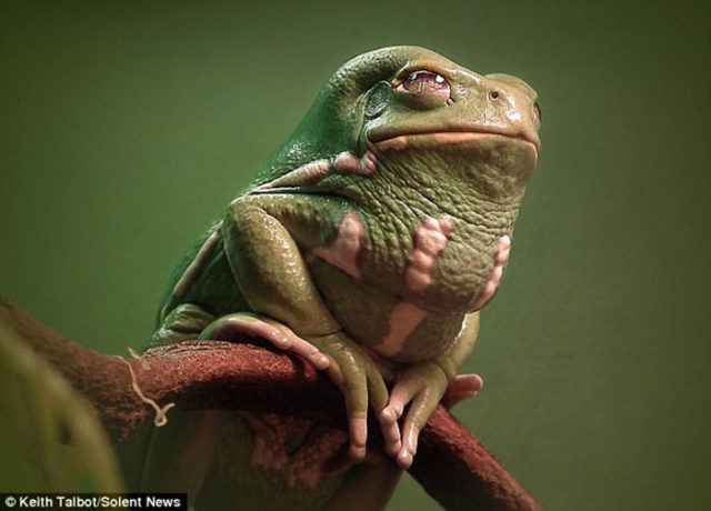 Jabba Grenouille : image 4