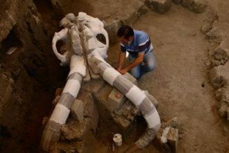Crâne Mammouth