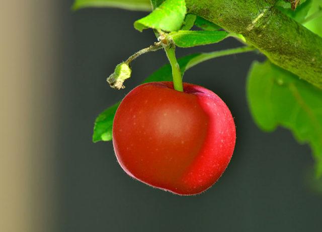 Apple Bêta 6