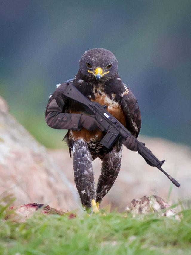 Aigle Photoshop Battle : photo 1