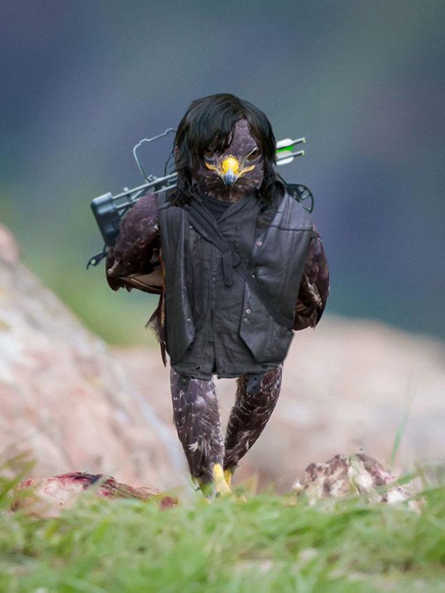Aigle Photoshop Battle : photo 6