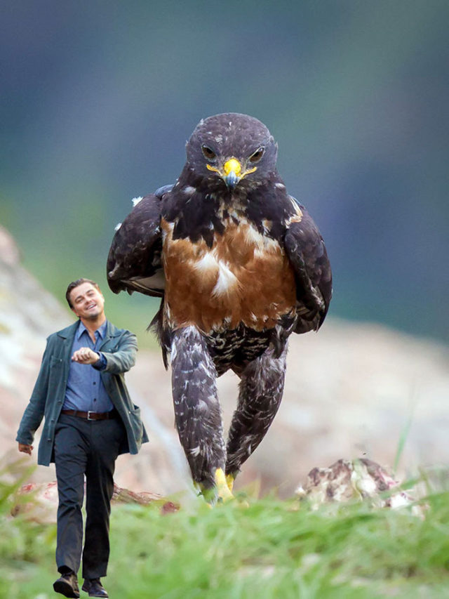 Aigle Photoshop Battle : photo 7