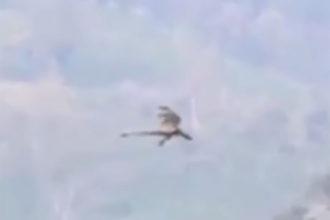 Vidéo Dragon
