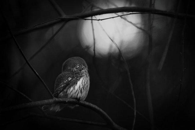 Wildlife Photographer of the Year 2016 : photo 10