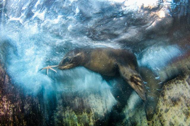 Wildlife Photographer of the Year 2016 : photo 12