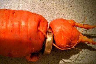 Drôle de carotte