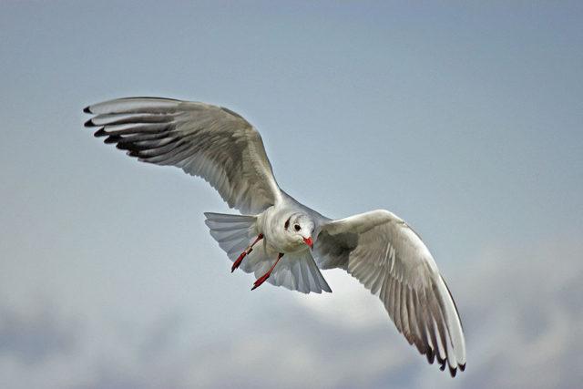 Drone oiseau