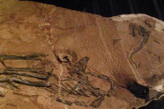 Lumusaurus